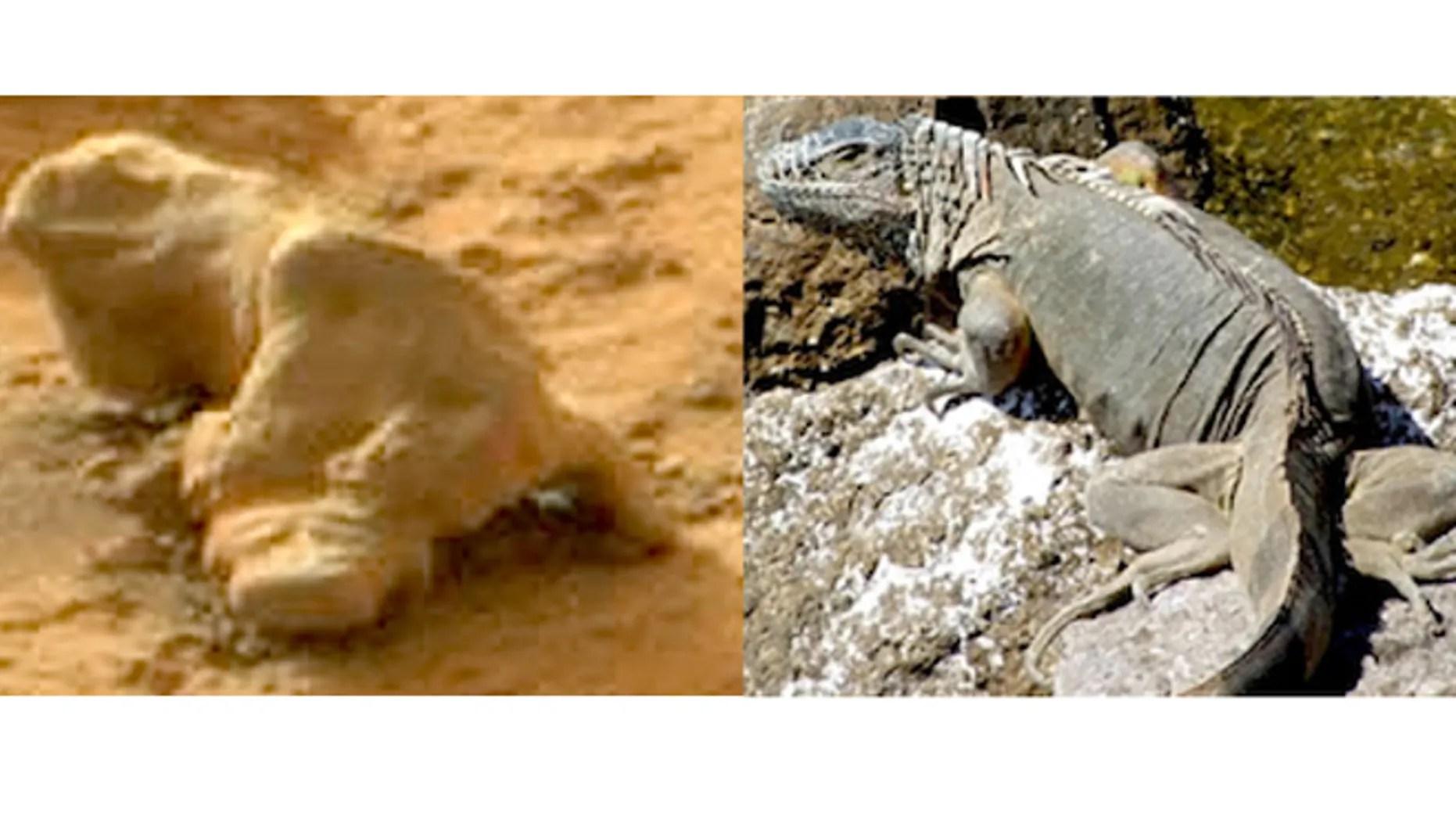 NASA Curiosity Rover spots iguana on Mars   Fox News