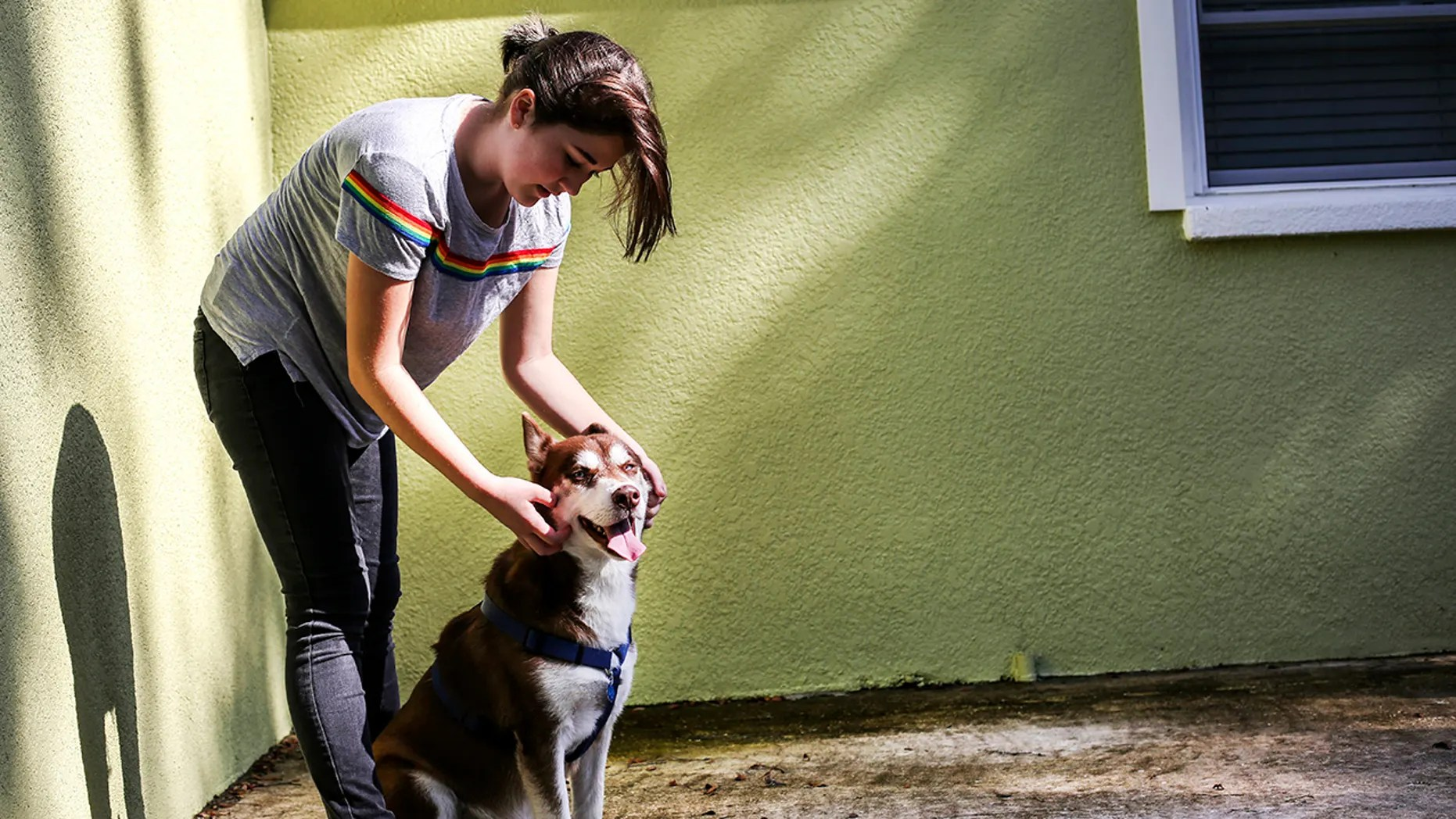 Rose Verrill, 13, rubs the head of a Husky named Sinatra at her home in Seffner, Fla. (Bronte Wittpenn/Tampa Bay Times via AP)