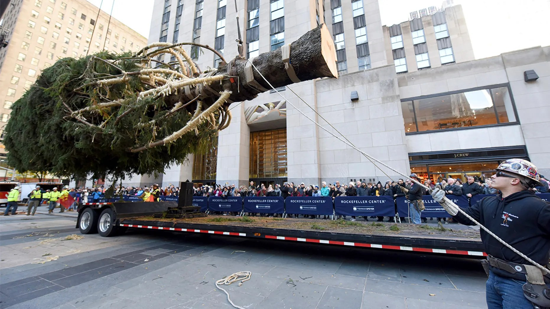 Workers prepare to raise the 2018 Rockefeller Center Christmas tree, a 72-foot tall, 12-ton Norway Spruce from Wallkill, New York, on Saturday. The 86th Rockefeller Center Christmas Tree Lighting ceremony will take place on Wednesday, Nov. 28. (Diane Bondareff/AP Images for Tishman Speyer)