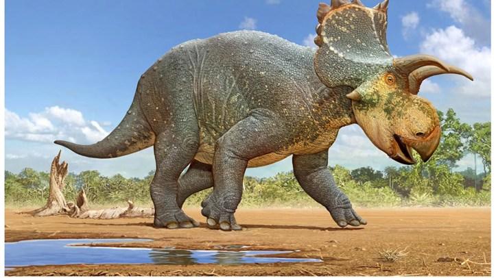 A restoration of the Crittendenceratops krzyzanowskii.