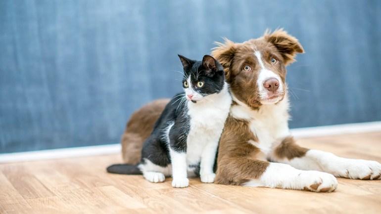 Die Studie wurde von Forschern der Perelman School of Medicine der University of Pennsylvania und der School of Veterinary Medicine geleitet.