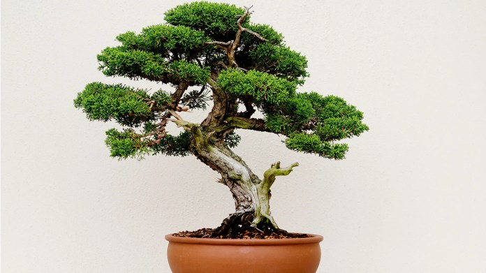 Thieves in Japan have stolen seven pairs of bonsai trees from a couple, prompting a request in social media.