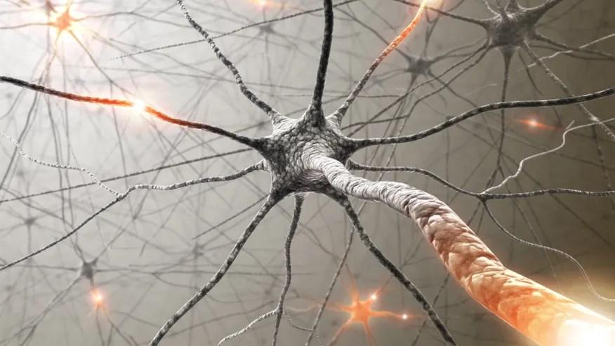 Brain neuron.jpg