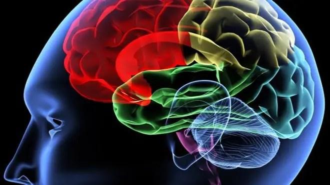 694940094001_1409784734001_640-brain.jpg