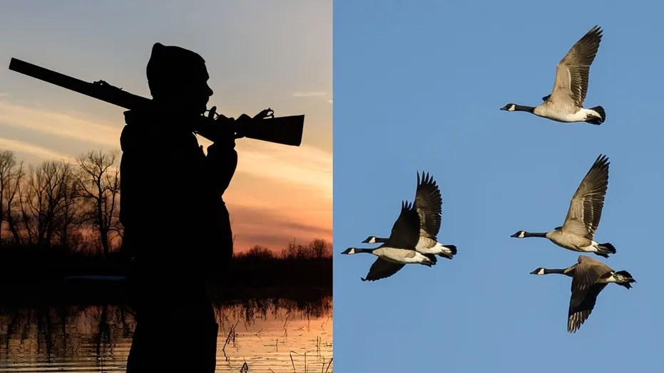 A hunter in Maryland was struck by a Canada goose that had been shot down by a member of his group.