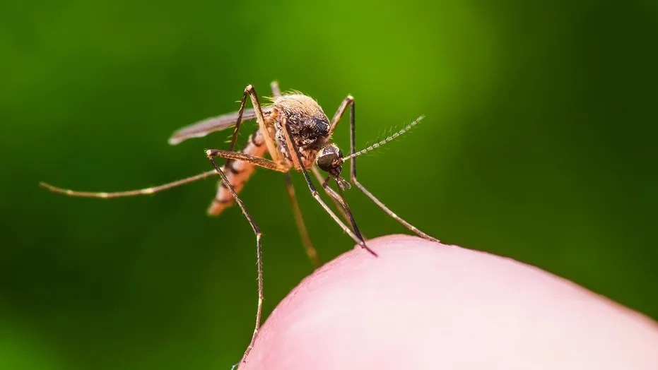 "A Michigan resident has been diagnosed with a case of Eastern equine encephalitis (EEE), a mosquito-borne virus that can lead to ""lasting brain damage."""