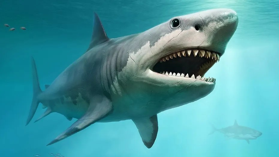 Megalodon from prehistoric times scene 3D illustration  (Credit: iStock)
