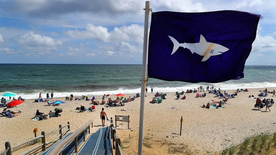A dwindle warning Cape Cod visitors of sharks blows in a breeze during an opening indicate to Nauset Beach in Orleans, Mass., on Aug. 31, 2018.