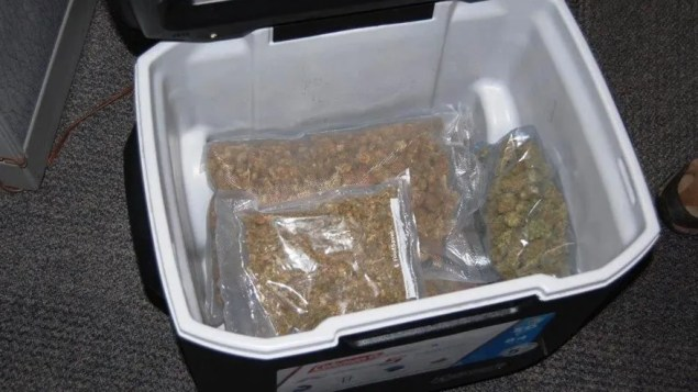 Cooler full of marijuana donated to a Goodwill in Monroe, Washington.