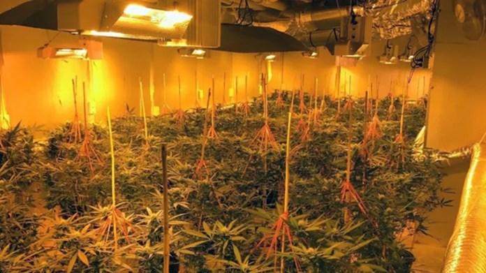 The basements in six Georgia homes were converted into indoor greenhouses for marijuana production, cops say.