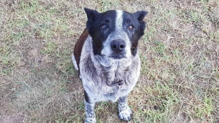 A dog named Max stayed with a  three-year-old girl who wandered away from her home Friday into the bushlands of Australia.