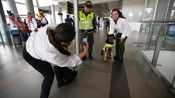 A woman poses for a photo with drug dog Sombra at the El Dorado airport in Bogota, Colombia, Thursday, July 26, 2018. Sombra's detective work is needed now more than ever as Colombia wrestles with soaring coca production that is testing traditionally close relations with the United States.  (AP Photo/Fernando Vergara)