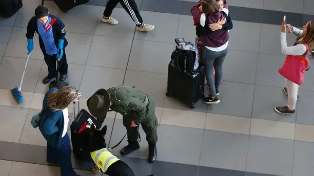Drug dog Sombra inspects a suitcase at the El Dorado airport in Bogota, Colombia, Thursday, July 26, 2018. On a typical day, Sombra is up by 6 a.m. and shuttled from a kennel to work at El Dorado airport inspecting packages and cargo. With her neon reflective vest, pointy ears and gaping mouth, she looks more like a beloved family pet than a veteran drug-sniffing police dog. (AP Photo/Fernando Vergara)