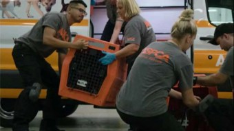 Palm Beach County could press charges against those who abandoned pets during Irma