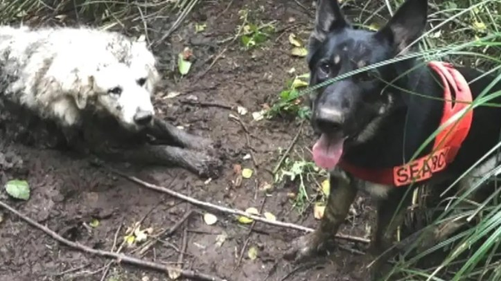 'Puppy' was stuck in mud for over 40 hours, rescuers used ropes to pull out dog safely.
