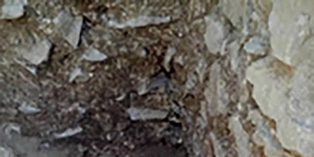 La fillette de 10 ans a été découverte couchée sur le côté dans un cimetière italien du Ve siècle, censé être réservé aux bébés, aux bambins et aux fœtus à naître. (Photo fournie par David Pickel / Stanford University)