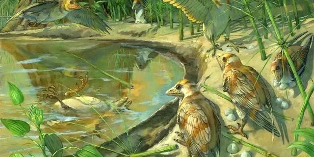 """L'esemplare, che rappresenta una nuova specie chiamata Avimaia schweitzerae, fu scoperto in depositi di 110 milioni di anni fa nella Cina nord-occidentale. Appartiene ad un gruppo chiamato Enantiornithes - """"uccelli opposti"""" - che erano comuni in tutto il mondo durante il periodo Cretaceo e vivevano accanto ai dinosauri. (Credito: SWNS)"""