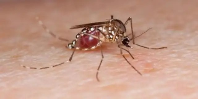 Mosquitoes are attracted to people with type O blood, lactic acid, and urea in sweat.