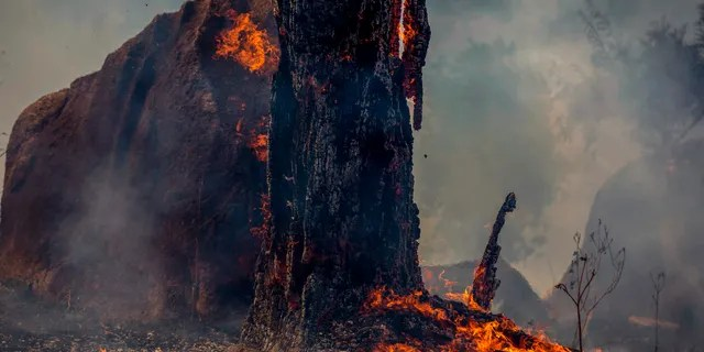 View of a burnt area of forest in Altamira, Para state, Brazil, in the Amazon basin, on August 27, 2019. - Brazil will accept foreign aid to help fight fires in the Amazon rainforest on the condition the Latin American country controls the money, the president's spokesman said Tuesday.
