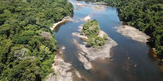 This undated photo provided by researchers in September 2019 shows typical electric eel highland habitat in Suriname's Coppename River. Two newly discovered electric eel species live in the highland regions of the Amazon.