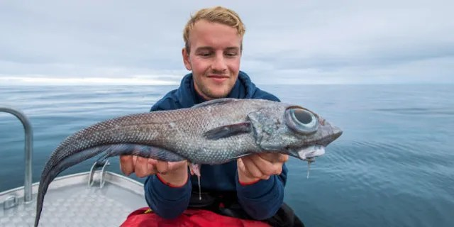 Oscar Lundahl claims that his colleague identified the creature as a ratfish, a relative to the shark that is rarely caught.