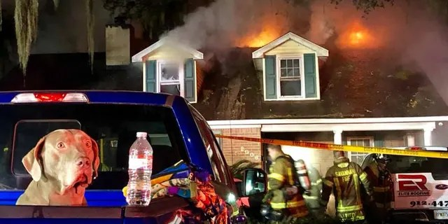 Household pet Sammy was credited with alerting his owner and family to a raging fire in their home Friday in Savannah, Georgia.