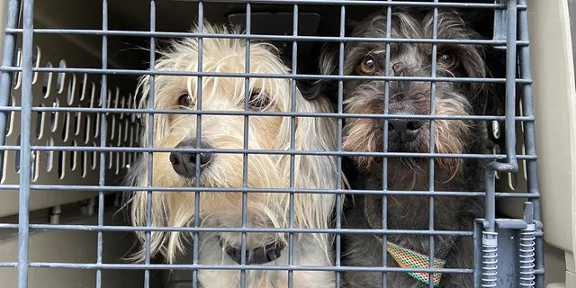 Police in Oakland, Calif. recovered dozens of dogs from a transport van Monday morning after the vehicle was stolen in Fremont.
