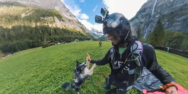 """""""I found a harness – super safe – and I tried to see his reaction when I put it on and went to the ledge. He seemed pretty comfortable,"""" the dog owner claimed."""