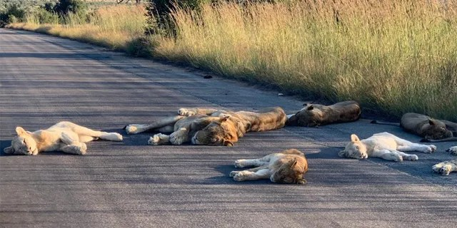Kruger National Park has been closed to visitors since March 25. (Kruger National Park/Richard Sowry)