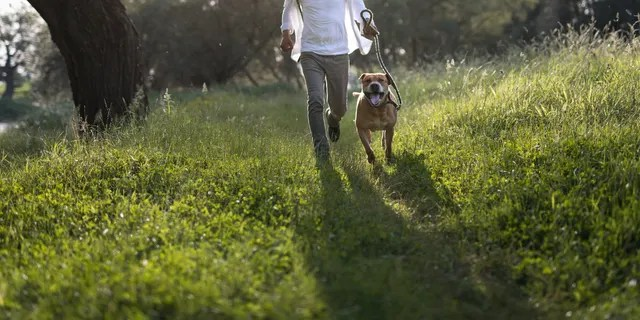 Dogs are very susceptible to tick bites and tickborne disease, the CDC says. Check pets for ticks under the collar, in and around the ears and around eyelids, among other areas. (iStock)