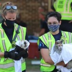 Maryland firefighters rescue pets from apartment fire; officials say cat, guinea pig are 'in good health'