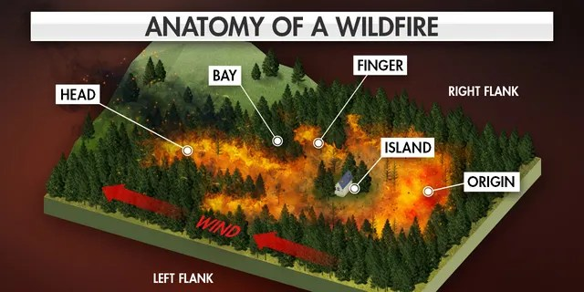 The anatomy of a wildfire.