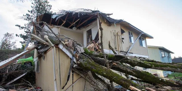 A windstorm toppled a large tree onto a house in Tacoma, Washington, early Wednesday, Jan. 13, 2021, trapping a woman in bed. Firefighters were able to extricate the woman and take her to an area hospital. (Drew Perine/The News Tribune via AP)