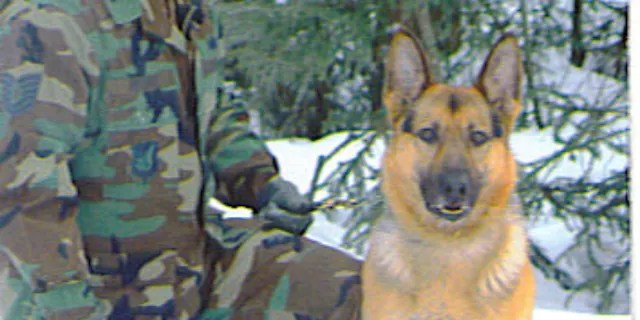 """Retired Air Force Maj. Sam Peters on Tuesday said the Pentagon needs to answer """"a lot of questions"""" regarding its withdrawal efforts, including reports of stranded military K9s, which the DoD has denied. (Credit: Sam Peters)"""