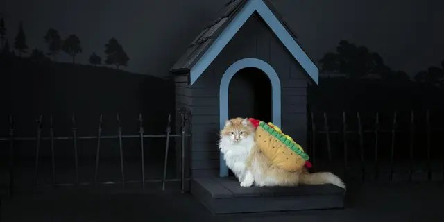 Foodies are sure to love any pet Halloween costume that reminds them of their favorite dish.
