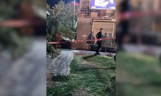 Tragedia en Tiberíades: una mujer fue asesinada por un árbol que le cayó encima en el paseo del Canal 7