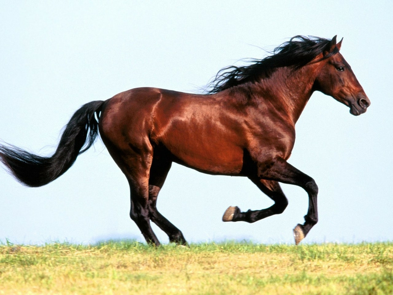 صور خيل خلفيات حديثة لاجمل الخيول فى العالم احبك موت