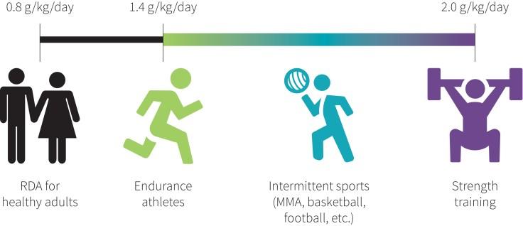 bodybuilding protein intake的圖片搜尋結果