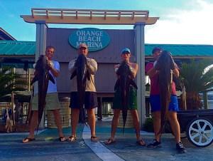four men holding four big cobia caught deep sea fishing in Orange Beach AL Spring 2015