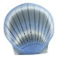 blue sea shell biodegradable marine urn for gulf of mexico burials to sea