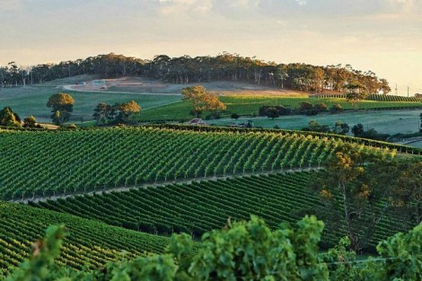vineyards-adelaide-hills-16555-3