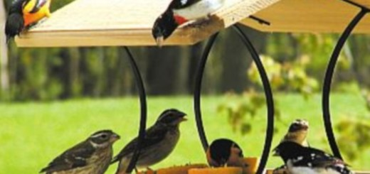 Birds at Feeder