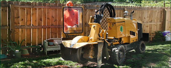 Stump Grinding Services Charlotte, NC