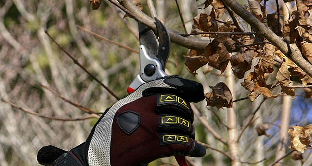 Dormant Pruning: Facts & Benefits