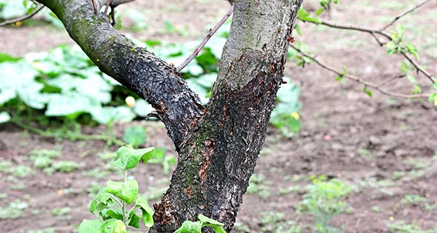 What are the Signs Of a Diseased Tree