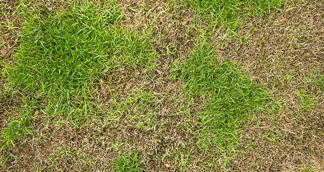 Grumpy About Crabgrass on Your Landscape? We can help!