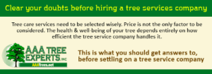 Clear your doubts before hiring a tree services company