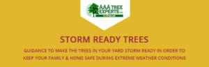 Storm Ready Trees