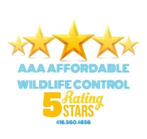 Wildlife Control Reviews