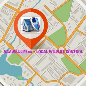 AAA Affordable Wildlife Control North York